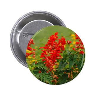 Fiery Red Hot Sally Salvia Flower Garden Pins