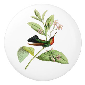 Fiery Throated Hummingbird Ceramic Knob