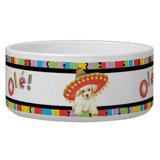 Fiesta Toy Poodle