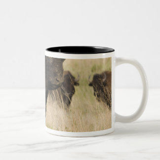 Fiesty young bison bull at the Tallgrass Two-Tone Mug
