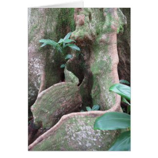 Fig Tree Roots Card