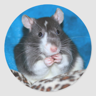 "Figaro Rattie 3"" Sticker"