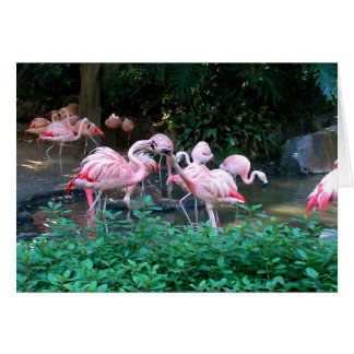 Fighting Flamingos Note Card
