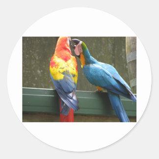 Fighting Parrots Round Sticker