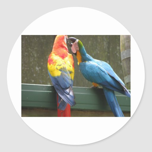 Fighting Parrots Sticker