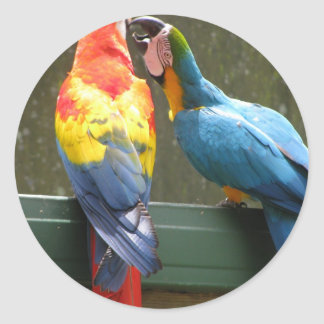 Fighting Parrots Classic Round Sticker