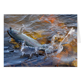 Fighting Rainbow Trout Card