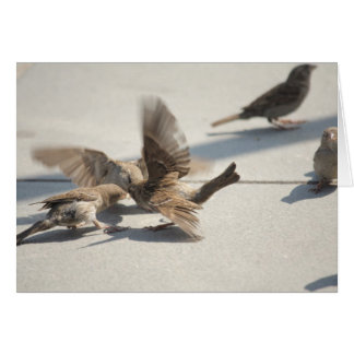 fighting sparrows card
