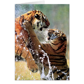FIGHTING TIGERS GREETING CARD