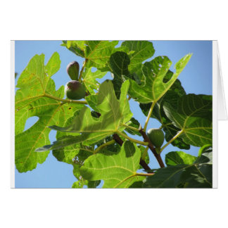 Figs on tree branches card