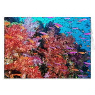 Fiji Color Splash Card