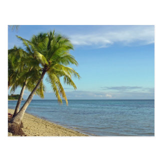 Fijian Beach and Palm Trees Postcard