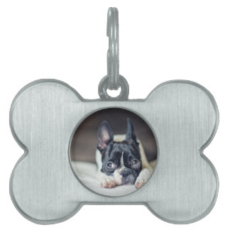 Fina the Boston Terrier Pet ID Tags