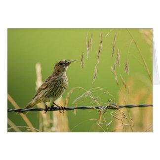 Finch eating seeds of a wild grass card