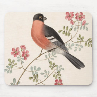 Finch from Junglewalk Mouse Pad