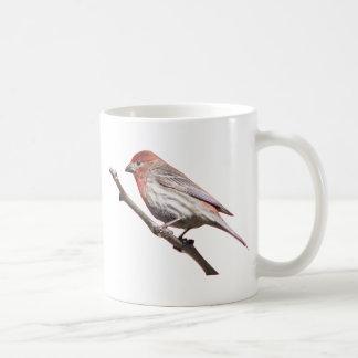 Finch on a branch coffee mug
