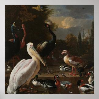 Fine art birds poster