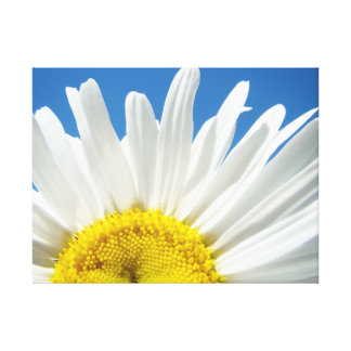Fine Art Canvas White Daisy Flower Blue Sky Stretched Canvas Print