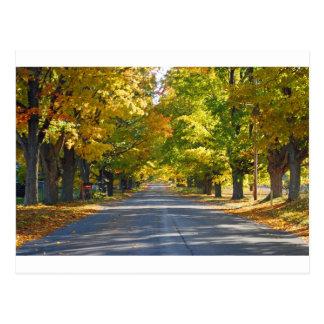Fine Art Print Tunnel of Trees Postcard