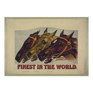 Finest Horses in the world Poster Prints