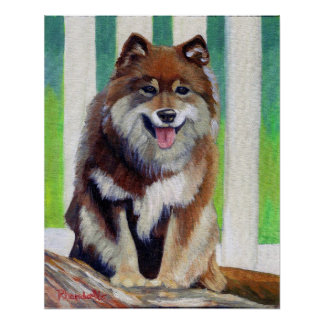 Finnish Lapphund Dog Portrait Poster