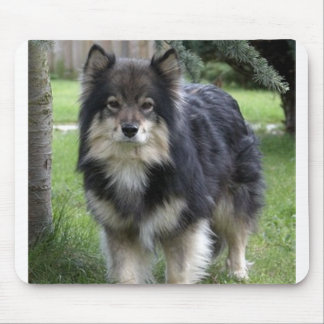 finnish lapphund full 2 mouse pad