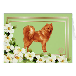 Finnish Spitz with Dogwood Flowers Card