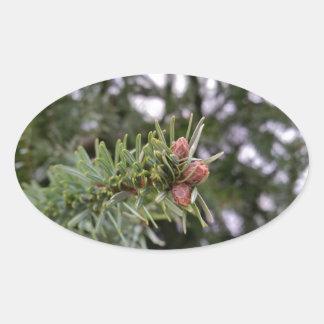 Fir buds oval sticker