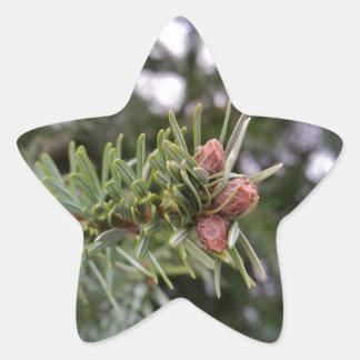 Fir buds star sticker