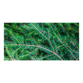 Fir tree branch picture card