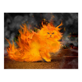 fire cat postcard