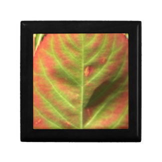 Fire Leaf Gift Box