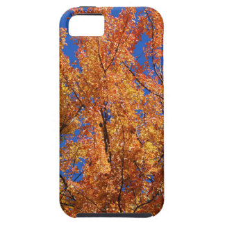Fire Orange Tree Case For The iPhone 5