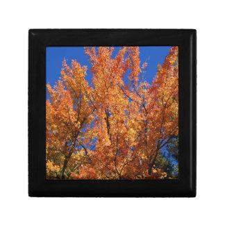Fire Orange Tree Gift Box