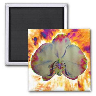 Fire Orchid Fridge Magnets