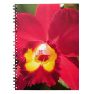 Fire Orchid Notebooks