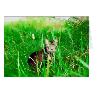 Firefox Feral Cat Oil Painting Greeting Card