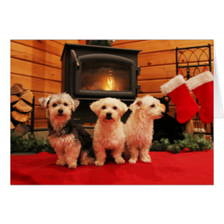 Fireside Pups Christmas Holiday Card