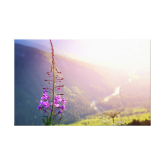 Fireweed at Glacier National Park Canvas Print