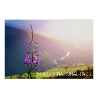 Fireweed at Glacier National Park Poster