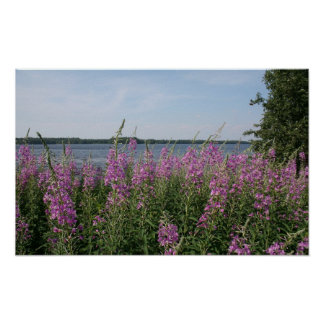 Fireweed Beach Poster