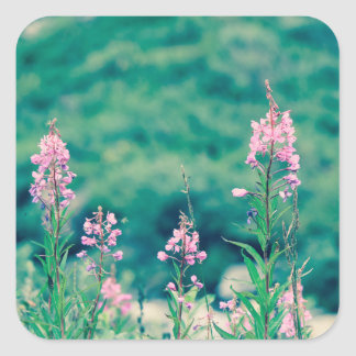 fireweed crossprocess square sticker