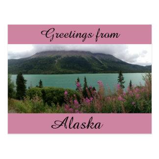 Fireweed Frenzy Postcard