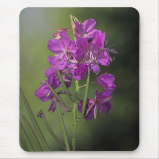 Fireweed Mouse Pad