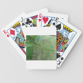 First buds on white mulberry tree ( Morus alba ) Bicycle Playing Cards
