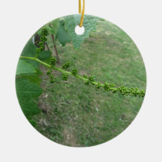 First buds on white mulberry tree ( Morus alba ) Ceramic Ornament
