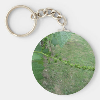 First buds on white mulberry tree ( Morus alba ) Key Ring
