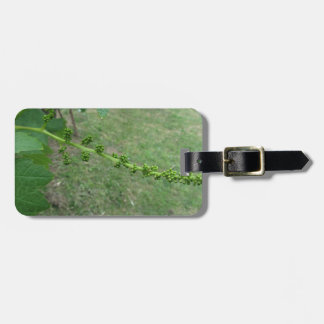 First buds on white mulberry tree ( Morus alba ) Luggage Tag