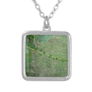 First buds on white mulberry tree ( Morus alba ) Silver Plated Necklace