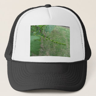 First buds on white mulberry tree ( Morus alba ) Trucker Hat